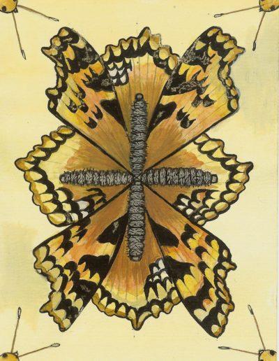 Tortoise Shell Butterfly